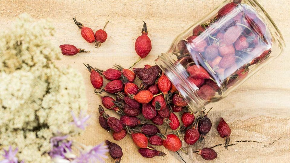 useful properties of rosehip RoseLine